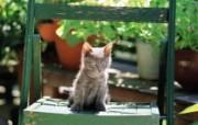 椅子上的小猫咪图片壁纸 后院里的小猫咪 动物壁纸