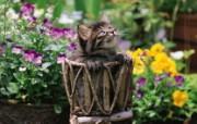 篮子里的小猫咪图片壁纸 后院里的小猫咪 动物壁纸