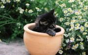 花盆里的小猫咪图片壁纸 后院里的小猫咪 动物壁纸
