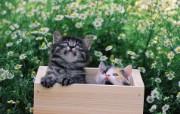 两只小猫咪 小箱里的小猫咪图片壁纸 后院里的小猫咪 动物壁纸