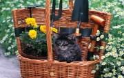 篮子里的小黑猫咪图片壁纸 后院里的小猫咪 动物壁纸