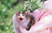 喵喵小猫 花篮里的小猫咪图片壁纸 后院里的小猫咪 动物壁纸