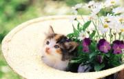 喵喵小猫 小猫与花朵图片壁纸 后院里的小猫咪 动物壁纸