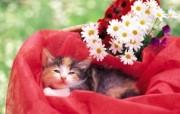 睡觉的小猫咪图片壁纸 后院里的小猫咪 动物壁纸
