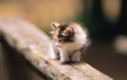 一个月大的可爱小猫咪图片壁纸 后院里的小猫咪 动物壁纸