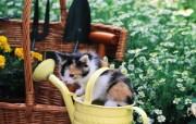 水壶里的小花猫咪图片壁纸 后院里的小猫咪 动物壁纸
