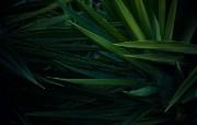 花卉植物生态风光壁纸 动物壁纸
