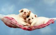 家有狗狗就是福 动物壁纸