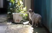 街角的流浪猫三 动物壁纸