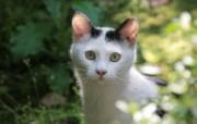 草丛里的流浪猫图片 街角的流浪猫三 动物壁纸
