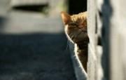 城市街角的流浪猫图片 街角的流浪猫三 动物壁纸