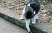 城市里的流浪猫图片 街角的流浪猫三 动物壁纸