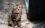 街角的小猫咪摄影高清 动物壁纸