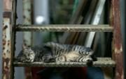 街角的小猫咪摄影高清壁纸 壁纸2 街角的小猫咪摄影高清 动物壁纸