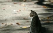 街角的小猫咪摄影高清壁纸 壁纸3 街角的小猫咪摄影高清 动物壁纸