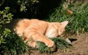 街角的小猫咪摄影高清壁纸 壁纸4 街角的小猫咪摄影高清 动物壁纸