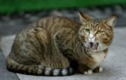 街角的小猫咪摄影高清壁纸 壁纸5 街角的小猫咪摄影高清 动物壁纸