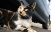 街角的小猫咪摄影高清壁纸 壁纸6 街角的小猫咪摄影高清 动物壁纸