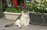 街角的小猫咪摄影高清壁纸 壁纸7 街角的小猫咪摄影高清 动物壁纸