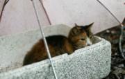 街角的小猫咪摄影高清壁纸 壁纸9 街角的小猫咪摄影高清 动物壁纸