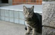 街角的小猫咪摄影高清壁纸 壁纸10 街角的小猫咪摄影高清 动物壁纸