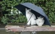 街角的小猫咪摄影高清壁纸 壁纸11 街角的小猫咪摄影高清 动物壁纸