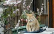 街角的小猫咪摄影高清壁纸 壁纸12 街角的小猫咪摄影高清 动物壁纸