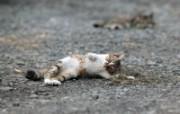街角的小猫咪摄影高清壁纸 壁纸13 街角的小猫咪摄影高清 动物壁纸