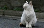 街角的小猫咪摄影高清壁纸 壁纸16 街角的小猫咪摄影高清 动物壁纸