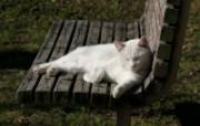 街角的小猫咪摄影高清壁纸 壁纸17 街角的小猫咪摄影高清 动物壁纸