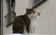 街角的小猫咪摄影高清壁纸 壁纸18 街角的小猫咪摄影高清 动物壁纸