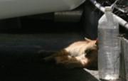 街角的小猫咪摄影高清壁纸 壁纸19 街角的小猫咪摄影高清 动物壁纸