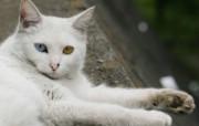 街角的小猫咪摄影高清壁纸 壁纸20 街角的小猫咪摄影高清 动物壁纸