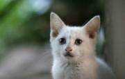 街角的小猫咪摄影高清壁纸 壁纸21 街角的小猫咪摄影高清 动物壁纸