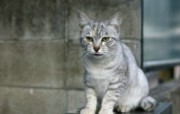 街角的小猫咪摄影高清壁纸 壁纸22 街角的小猫咪摄影高清 动物壁纸