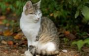 街角的小猫咪摄影高清壁纸 壁纸23 街角的小猫咪摄影高清 动物壁纸