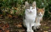 街角的小猫咪摄影高清壁纸 壁纸24 街角的小猫咪摄影高清 动物壁纸