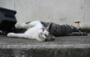 街角的小猫咪摄影高清壁纸 壁纸25 街角的小猫咪摄影高清 动物壁纸