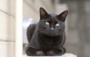 街角的小猫咪摄影高清壁纸 壁纸49 街角的小猫咪摄影高清 动物壁纸