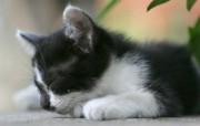 街角的小猫咪摄影高清壁纸 壁纸26 街角的小猫咪摄影高清 动物壁纸
