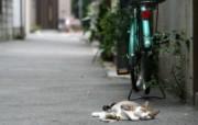 街角的小猫咪摄影高清壁纸 壁纸50 街角的小猫咪摄影高清 动物壁纸