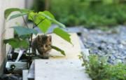 街角的小猫咪摄影高清壁纸 壁纸27 街角的小猫咪摄影高清 动物壁纸