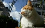 街角的小猫咪摄影高清壁纸 壁纸74 街角的小猫咪摄影高清 动物壁纸