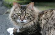 街角的小猫咪摄影高清壁纸 壁纸51 街角的小猫咪摄影高清 动物壁纸