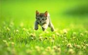 经典猫咪壁纸 动物壁纸