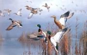 精美纯手绘壁纸飞禽系列 动物壁纸