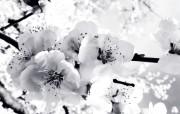 精美高清植物花卉壁纸 动物壁纸