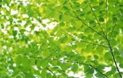 精品绿色树叶植物壁纸 动物壁纸