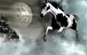 骏马奔腾 动物壁纸