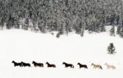 骏马写真 壁纸32 骏马写真 动物壁纸